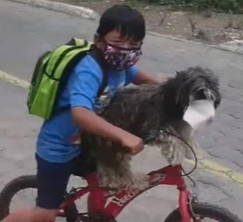 la-mascherina-al-cane-ai-tempi-del-coronavirus-il-video-diventa-virale