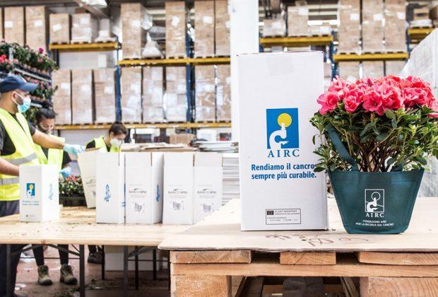un-fiore-per-la-festa-della-mamma-le-azalee-dellairc-tornano-in-vendita-anche-su-amazon