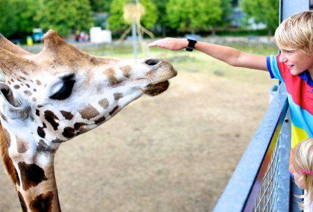 il-sindaco-belga-blocca-le-gite-scolastiche-negli-zoo-sono-diseducative