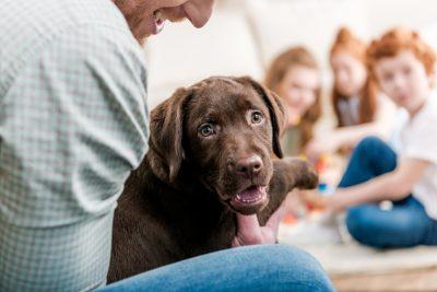 che-ruolo-deve-avere-un-cane-allinterno-della-famiglia