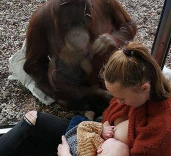 empatia-tra-mamme-lemozionante-incontro-tra-una-donna-che-allatta-e-un-orango-diventa-virale