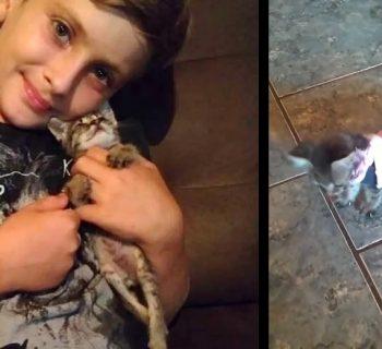 il-gattino-e-disabile-bimbo-di-9-anni-costruisce-un-carrellino-per-aiutarlo