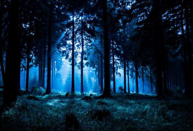 una-notte-soli-nel-bosco-il-rito-di-passaggio-olandese