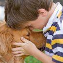 morte-di-un-animale-domestico-come-aiutare-il-bambino-ad-affrontare-il-lutto