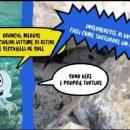 no-a-secchiello-e-retino-in-spiaggia:-l'appello-dell'enpa-per-proteggere-gli-animali-marini