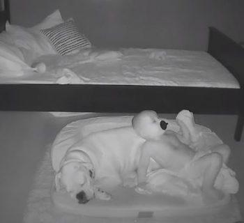 ogni-notte-scende-dal-lettino-per-dormire-con-il-suo-cane,-la-dolcissima-amicizia-di-finn-e-brutus